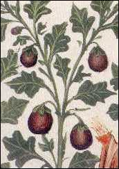 Oldcook : Vegetables in Medieval Europe - Aubergines Tacuinum sanitatis