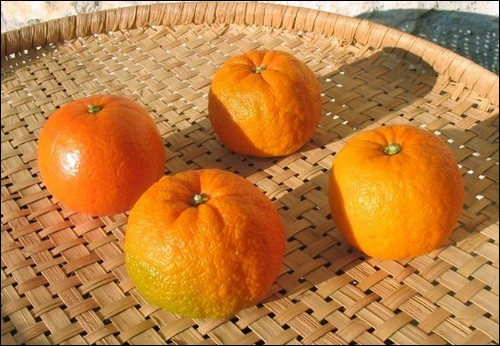 Oldcook : une orange et 3 bigarades